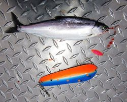 Chelan-Kokanee-and-Kokabow-Blade-and-Spinner-web